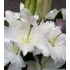 White Lily Double Ended Spray